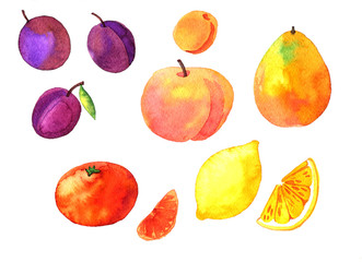 watercolor drawing fruits