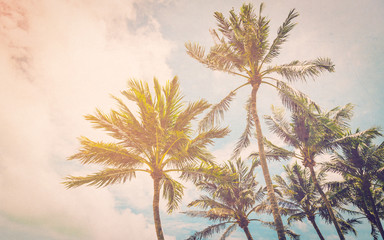 Coconut palm on sea beach with vintage effect.