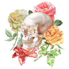 Illustration with skull and roses