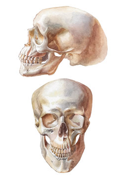 Illustration with two skulls