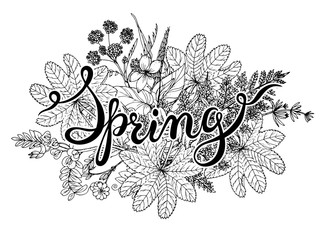 Hand lettering word Spring with hand drawn herbs and flowers.