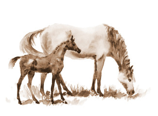 Sepia watercolor mare and foal on white. Beautiful hand painted illustration of two horses on the field.