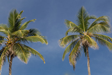 palms with sky at background