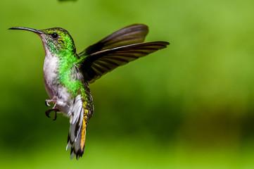 Beautiful Hummingbird with amazing colors