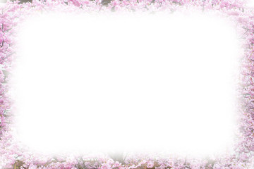 Photo frame background with Beautiful pink cherry blossom, Sakura flowers, copy space, place for text