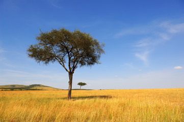 Landscape with tree in Africa