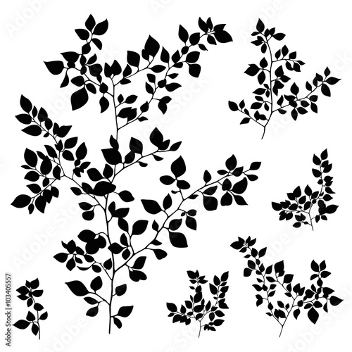 quotbranches leaves silhouette setquot stock image and royalty