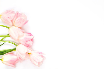 Pink tulips on white background. Top view. Flat lay.