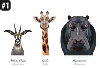ANIMAUX -Portraits - #1 - Girafe - Antilope - Hippopotame