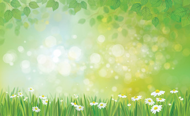 Vector summer background, leaves border and grass with chamomile
