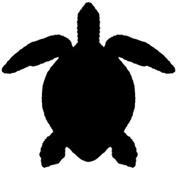 Silhouette of the sea turtle isolated on white background.