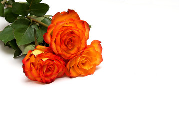 bouquet of orange roses isolated on white background