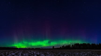 Northern lights over forest in Estonia