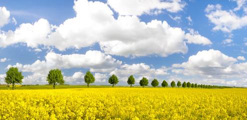Obraz Drzewa na wiosennym polu kwitnącego rzepaku - fototapety do salonu