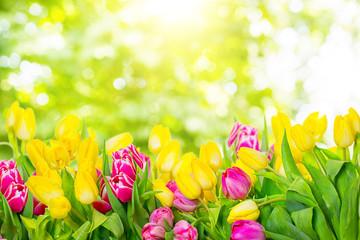 tulip bokeh backgrounds