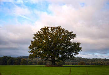 Big old tree on a meadow
