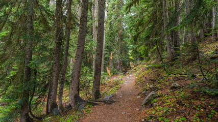 A path in the thick spruce forest. HEATHER-MAPLE PASS LOOP TRAIL, Washington state