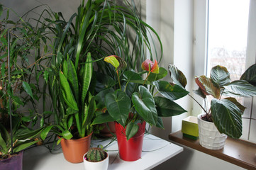 Mix of houseplants in the white room