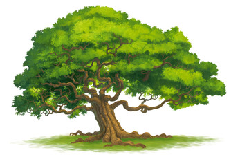 tree isolate illustration
