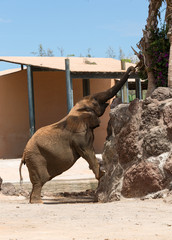 One Elephant in a safari park