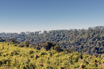 Evergreen Forest Background at Phu Kradueng National Park, Loei Province, Thailand