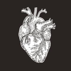 Vintage engraved human heart. Vector illustartion.