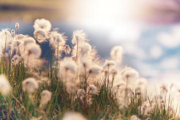 Polar flowers