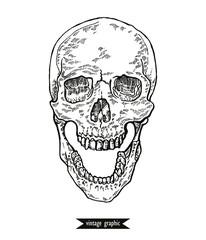 Hand drawn skull in mochrome line art graphic. Vector