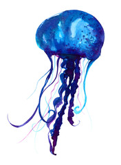 Jellyfish watercolor illustration. Painted medusa isolated on white background, underwater wildlife.