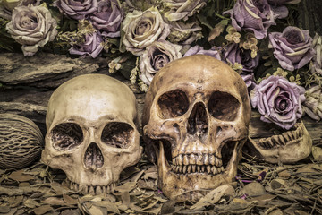 still life couple human skull with roses