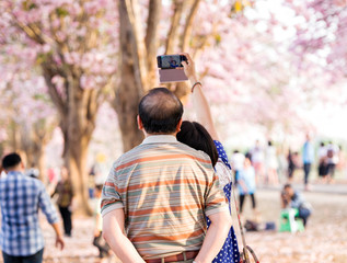 Traveler taking a photo of cherry blossoms tree on vacation