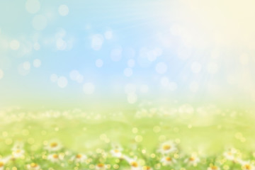 Spring or summer blurred nature background with grass.
