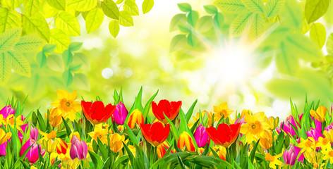Frühlingsboten Gutschein