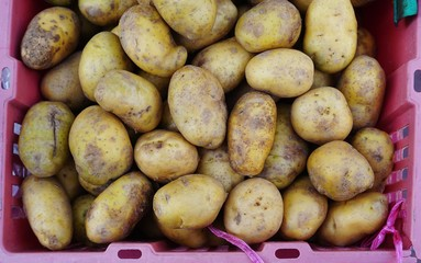 New potatoes in a crate at the market