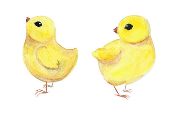 Watercolor chickens isoalated on white background. Raster illustration