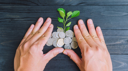 plant and coins by hands top view, investment and business conce