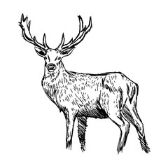 illustration vector doodle hand drawn of sketch reindeer isolated