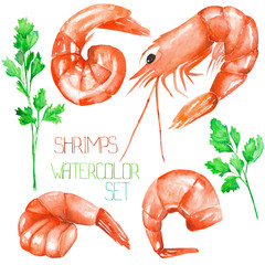 A set with the isolated watercolor shrimps and greenery, hand-drawn on a white background
