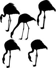 set of five flamingo silhouettes isolated on white