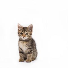 Little cute tabby kitten isolated on white background
