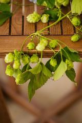 hop floral composition