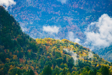 Amazing view of Slovenian forests near Bled, Slovenia.