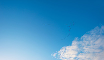 Flock of geese flying in a blue cloudy sky