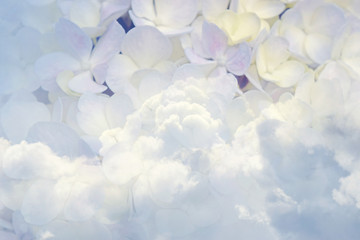 Floral background soft purple hydrangea flowers and sky (vintage  soft color style)