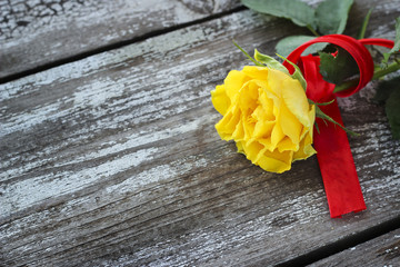 Yellow rose with red ribbon