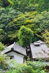 嵯峨野の風景