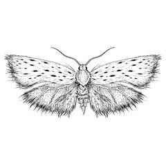 Vector illustration - moth. Graphics.