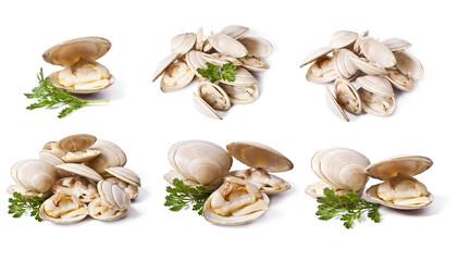 Photo sur Plexiglas Coquillage clams set isolated on white background