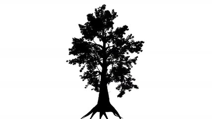 Thick Tree Roots Silhouette