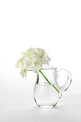 pelargonium flowers in a glass jug